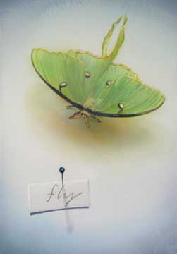 Fly, 2008, watercolor